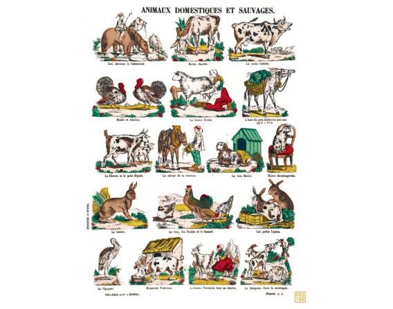 "Poster "" Animaux domestiques et sauvages"""