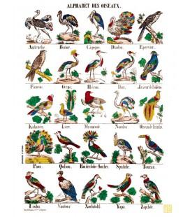 """Poster """"Alphabet des oiseaux"""""""