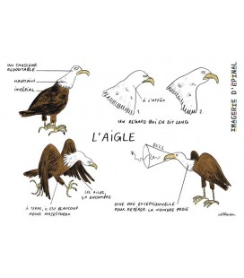 Magnet Aigles par Zoé Thouron