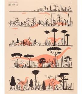 """Image """"Les plantes du Silurien au Néogène"""""""