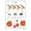"""Grande affiche """"Les abeilles"""""""