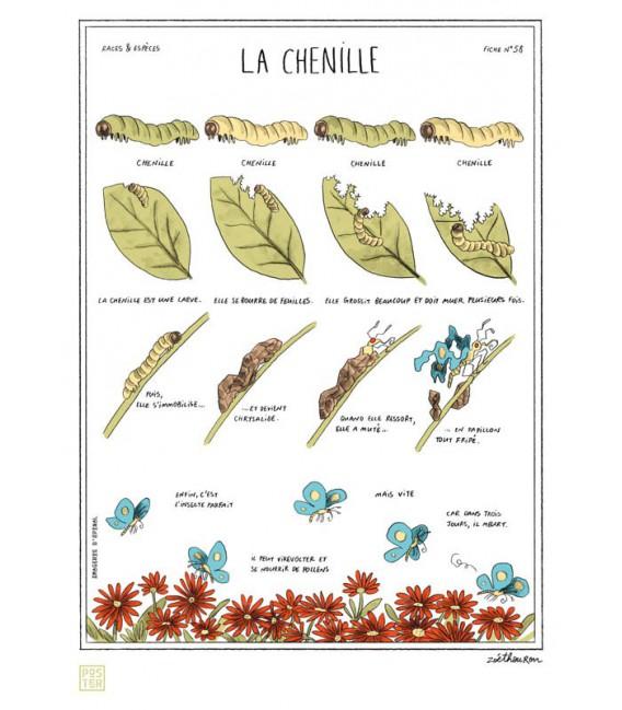 """Grande affiche """"La chenille"""""""