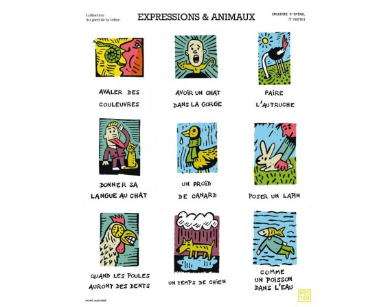 "Affiche ""Expressions et animaux"""