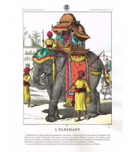 Image L'Eléphant