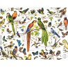 lot de 25 sets de table Oiseaux