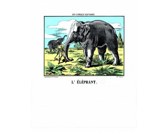 Image L'Eléphant - Animaux Sauvages