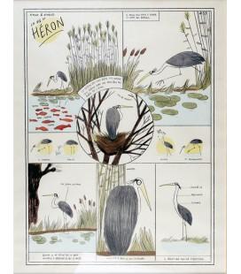 """Image """"La Vie du Héron"""""""