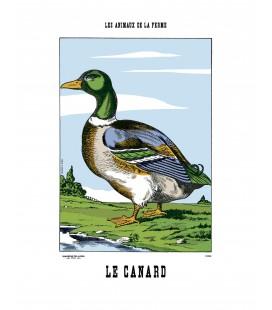 Image Le Canard - Animaux de la Ferme