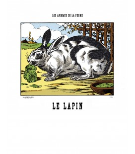 "Image ""Le lapin"""