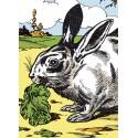 Image Le Lapin - Animaux de la Ferme