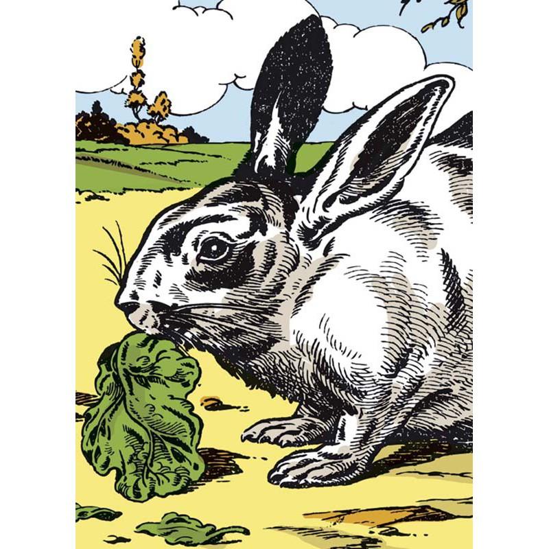 Image le lapin maison images d 39 pinal - Images d animaux de la ferme ...