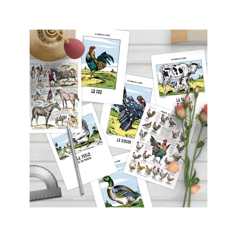 lot de 3 cartes simples animaux de la ferme imagerie d pinal. Black Bedroom Furniture Sets. Home Design Ideas