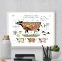 """Image """"Constitution de la vache"""" par Zoé Thouron"""