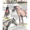 """Affiche """"Des chevaux"""""""