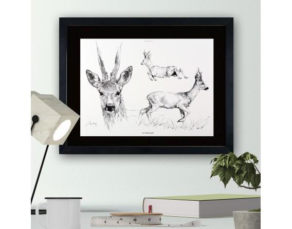 """Image """"Le chevreuil"""" - collection Les animaux de notre région"""