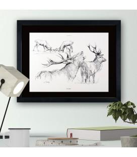 """Image """"Le cerf """" - collection Les animaux de notre région"""