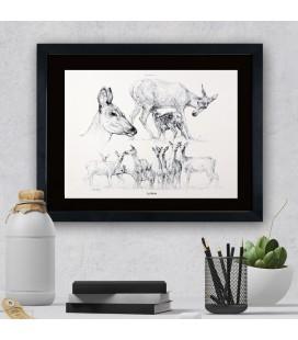 """Image """"La biche """" - collection Les animaux de notre région"""