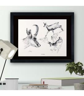 """Image """"Le chamois """" - collection Les animaux de notre région"""