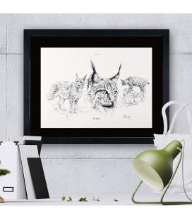 """Image """"Le lynx """" - collection Les animaux de notre région"""
