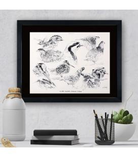 """Image """"La caille"""" - collection Les animaux de notre région"""