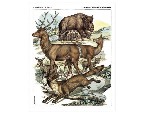 """Affiche """"Les animaux des forêts vosgiennes"""""""