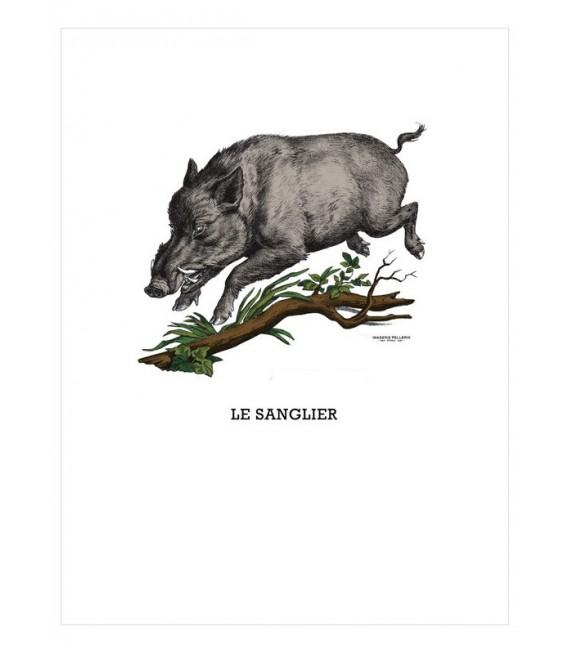 """Image """"le sanglier"""""""