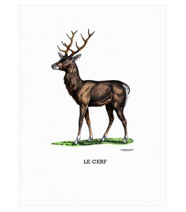 "Image ""Le cerf"""