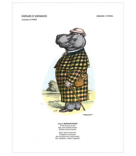 "Collection drôles d'animaux ""L'hippopotame"""