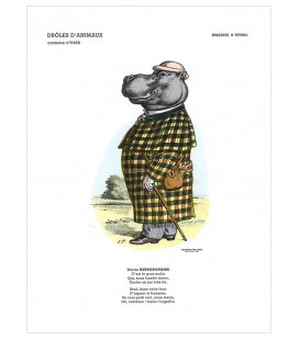 "Image ""L'hippopotame"" - collection Drôles d'animaux"