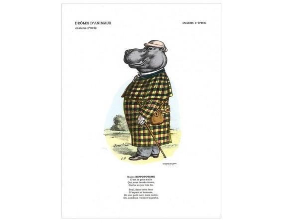 """Collection drôles d'animaux """"L'hippopotame"""""""