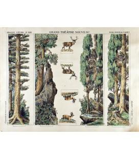 GRAND THÉÂTRE NOUVEAU Forêt (avec coulisses)