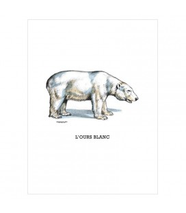 "Image "" L'ours blanc"""
