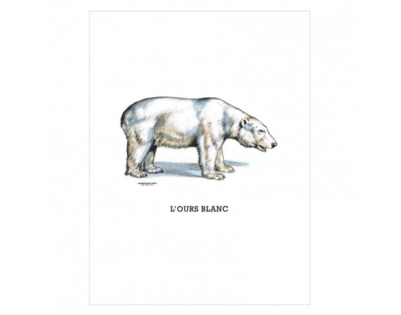 "Image ""L'ours blanc"""