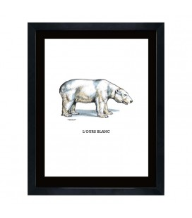 """Image """"L'ours blanc"""""""