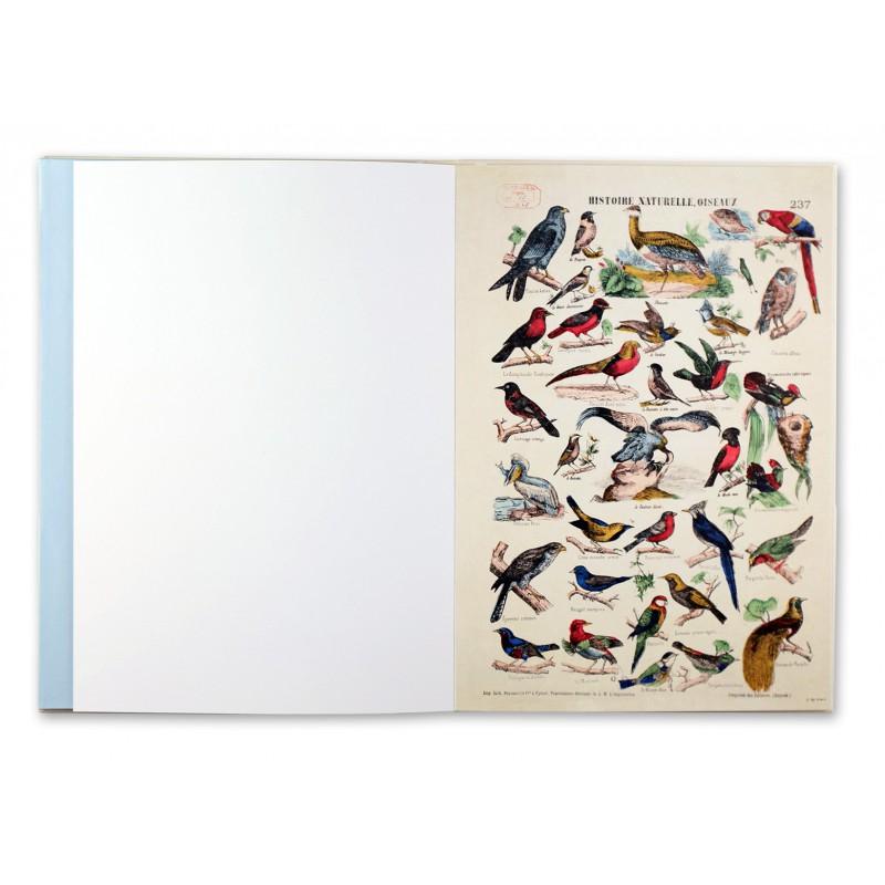 Oiseaux imagerie dépinal
