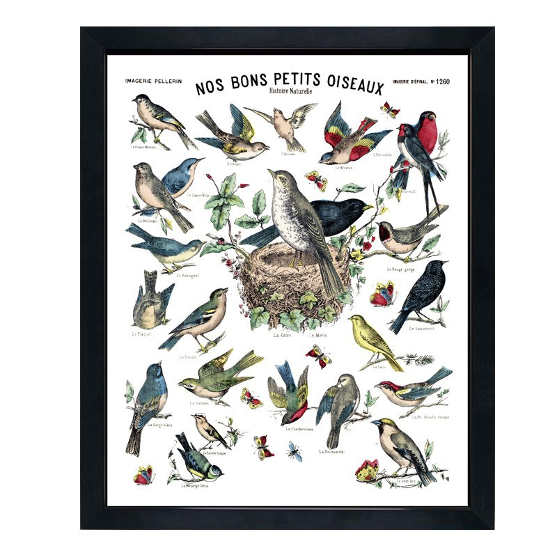 affiche nos bons petits oiseaux maison images d 39 pinal. Black Bedroom Furniture Sets. Home Design Ideas