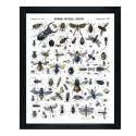 "Affiche ""Insectes"""