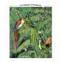 """Affiche """"Les oiseaux étrangers"""""""