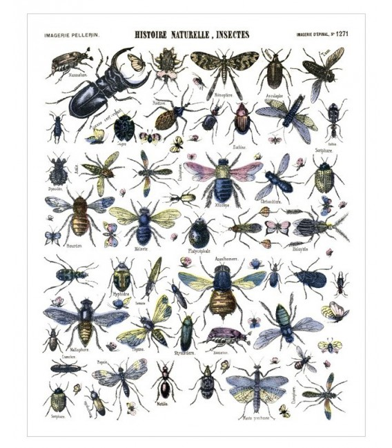 "Affiche ""Insectes"""