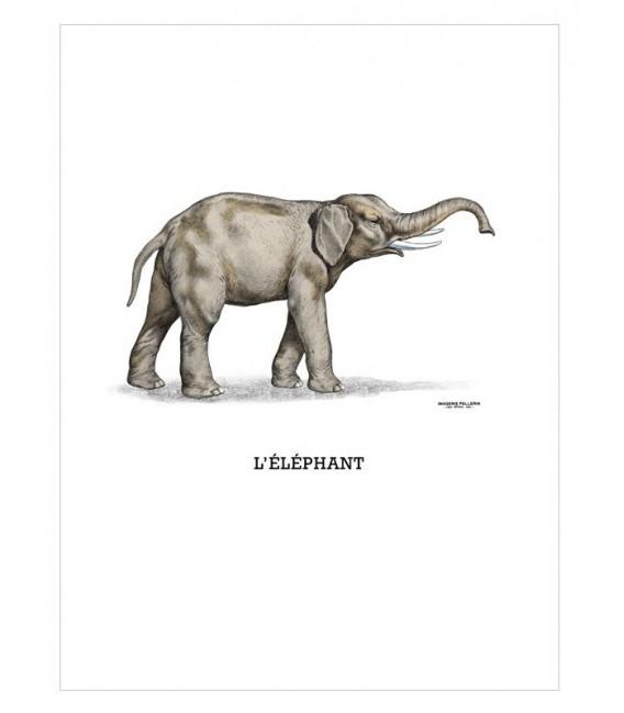"""Image """"L'éléphant"""""""