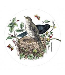 """Pilulier """"Petits oiseaux"""""""