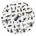 """Presse-papiers """"Insectes"""""""
