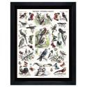 "Image ""Histoire naturelle oiseaux"""