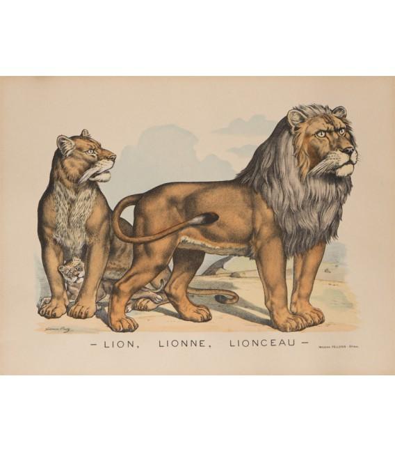 LION, LIONNE, LIONCEAU