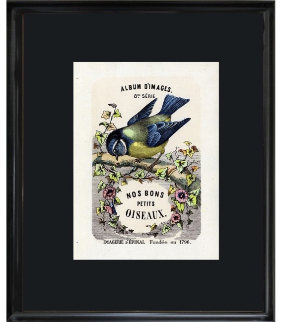 """Collection Edition Originale """"Nos bons petits oiseaux"""""""