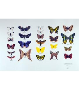 """Image """"Les papillons"""""""