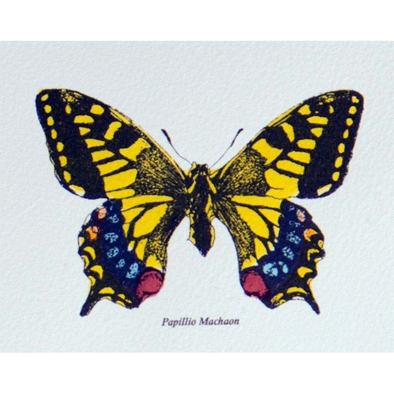 Image les papillons maison images d 39 pinal - Images de papillon ...