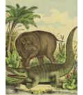 décor panoramique crocodile