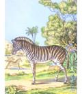 décor panoramique zèbre couleur