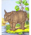 décor panoramique rhino couleur